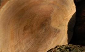 Достоинства древесины, как строительного материала