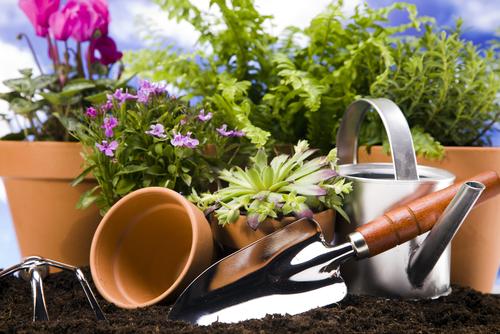 Зимний сад в доме. Чтобы лето не кончалось!