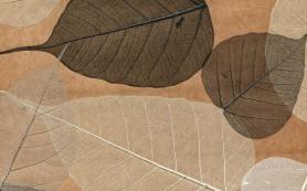 Как клеить натуральные обои-листья?