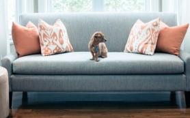 Как обустроить интерьер, если в доме есть животные