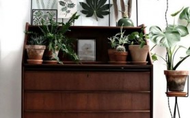 Домашние растения: полезные и опасные