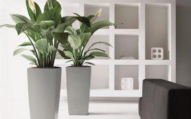 Флористика в дизайне интерьеров