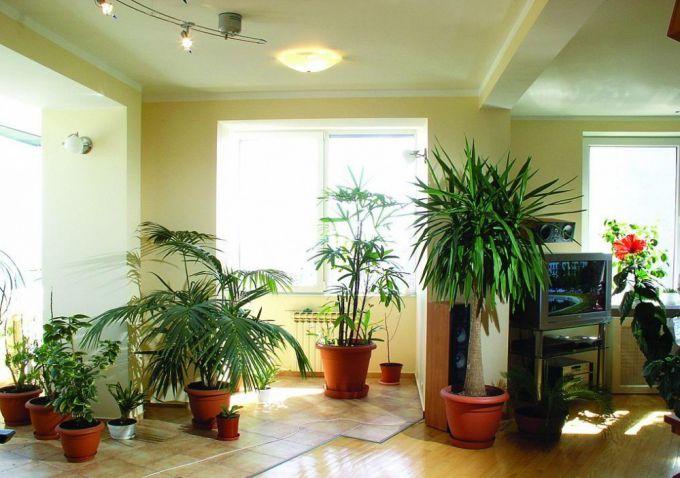 Какие растения создают положительную энергетику в доме