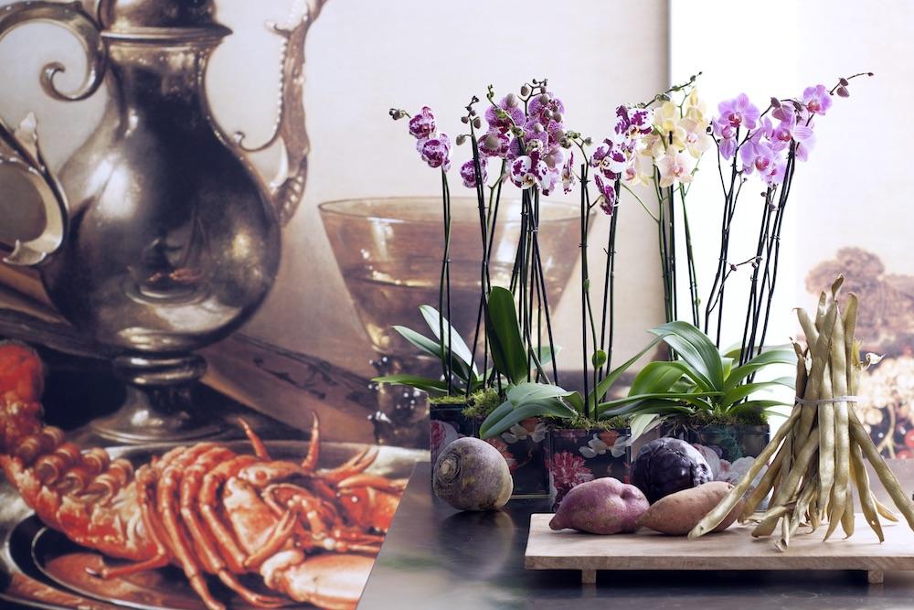 5 сортов орхидей, которые преобразят ваш интерьер