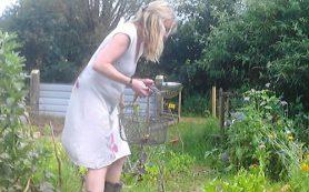 Создаем сад и огород для ленивых