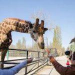 Природный зоопарк с открытыми возможностями