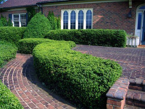 Кусторезы — современный садовый инструмент