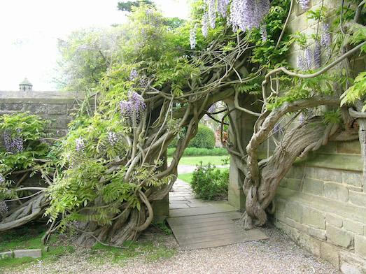 Какие растения выбрать для живой изгороди?