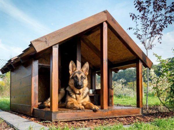 Деревянная будка: комфортное и уютное жилье для собаки