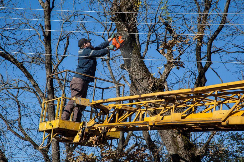 Как проводятся работы по вырубке деревьев над ЛЭП?