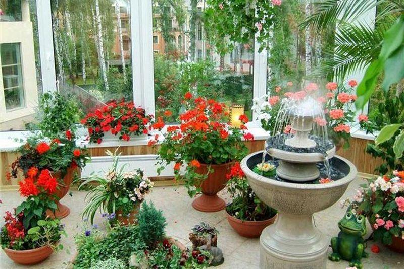 Зимний сад в домашних условиях. Пусть всегда будет лето!