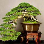 Комнатные растения как элемент декора интерьера