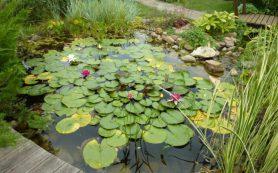 Пластиковый пруд: виды, особенности монтажа и ухода