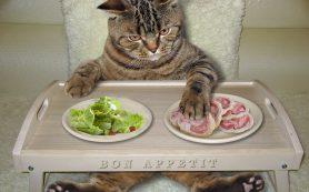 Чем лучше кормить кошку?