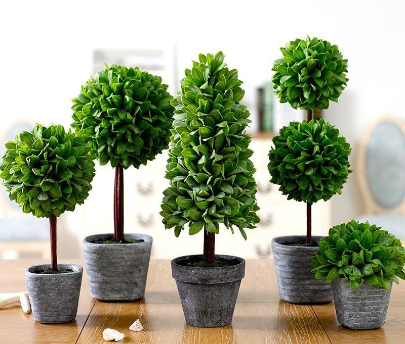 Растения в интерьере: гармоничная игра контрастов
