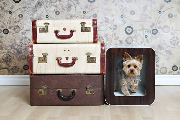 Дом для любителей собак
