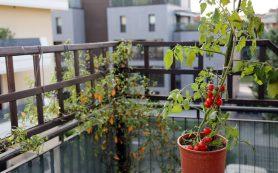 Как создать Эдем на своем балконе посреди лета и не за миллион