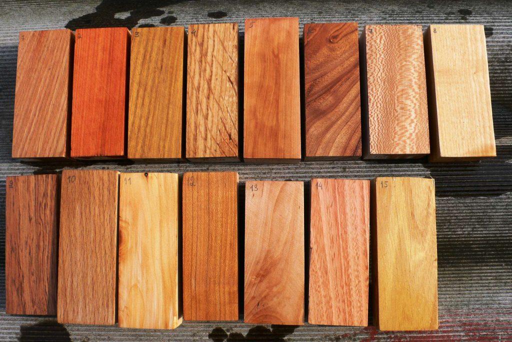 Порода дерева: отличительные черты