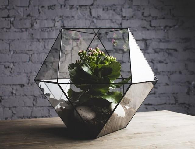 Новая мода на комнатные цветы – флорариумы