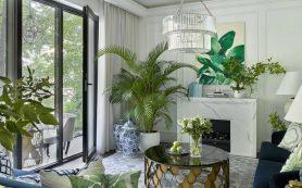 Горшечные растения как элемент декора помещений