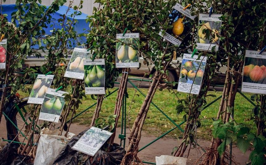 Как разместить на участке плодовые деревья?