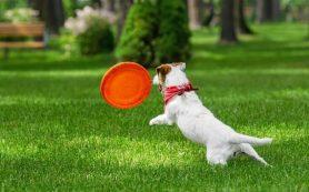 Как выбрать рулонный газон — зависит от назначения