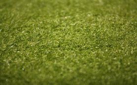 Необычное озеленение интерьера или оливковое дерево в домашних условиях