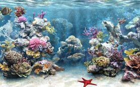 Рифовый морской аквариум: выращивание кораллов